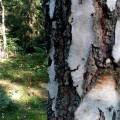 Miholjsko ljeto u čarobnoj šumi
