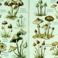 Magic Mushrooms Finally Being Accepted As Viable Treatment For Depression